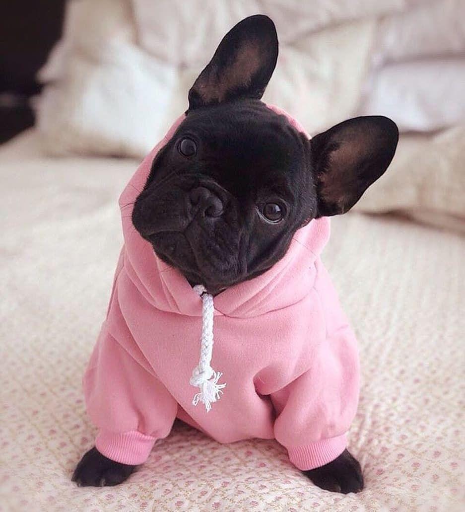 basic french bulldog hoodie
