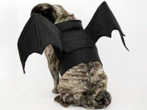 bat pig dog costume
