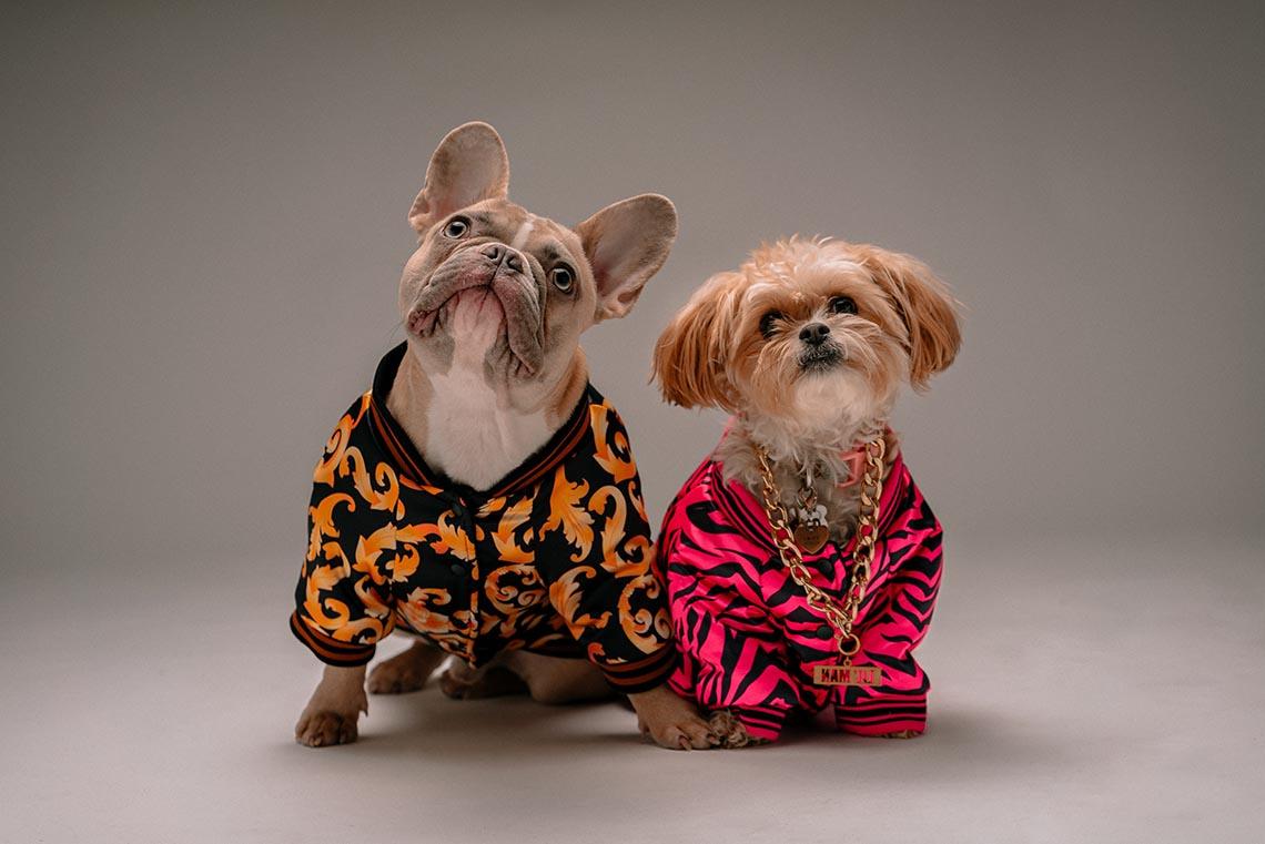 french bulldog jacket coats