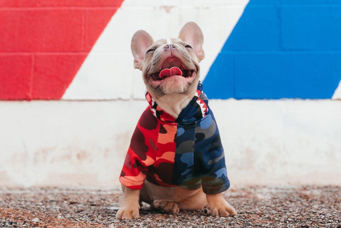shirts for french bulldog
