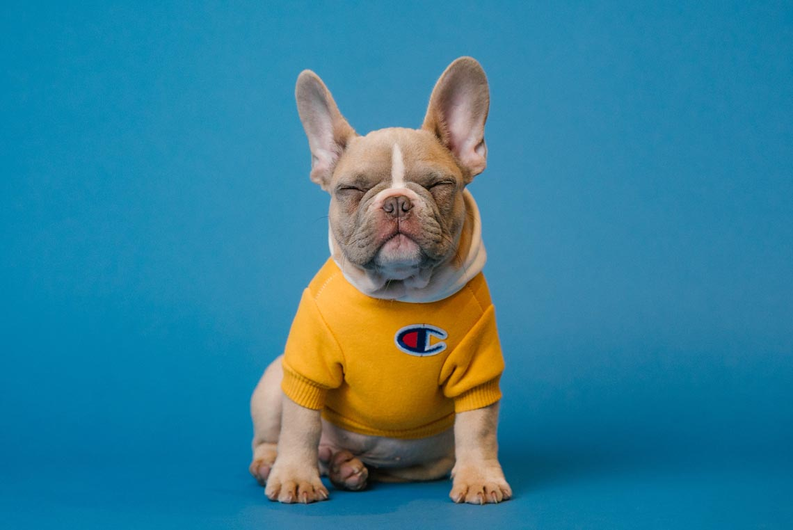 sweaters for french bulldog