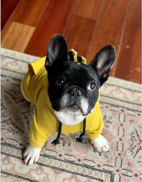 sporty NYC dog hoodie