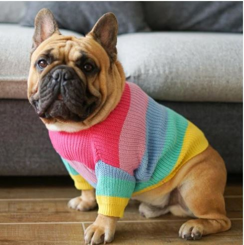jumper for french bulldogs 1
