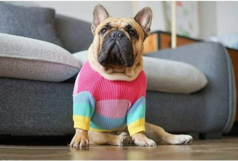 jumper for french bulldogs