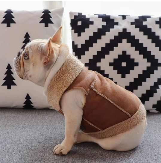 Vintage Leather French Bulldog Jacket