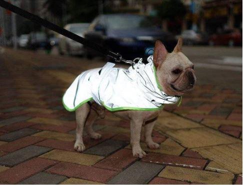 windbreaker reflective french bulldog vest 2