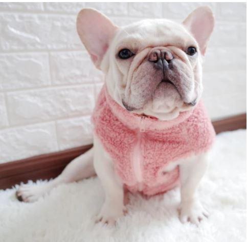 french bulldog vest