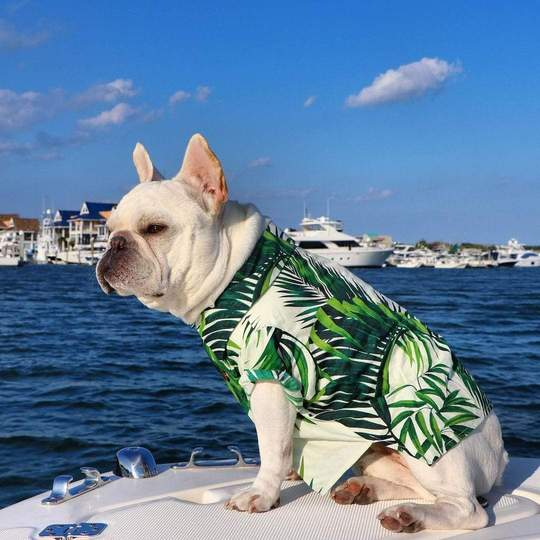 beach life french bulldog shirts frenchie world shop 28828912255125 540x
