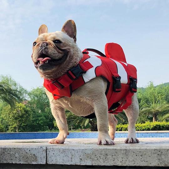clownfish summer french bulldog life jacket frenchie world shop 11950106804269 540x
