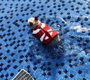 clownfish summer french bulldog life jacket frenchie world shop 11952299900973 540x