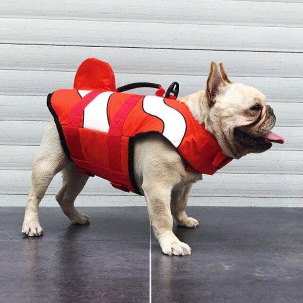 clownfish summer french bulldog life jacket frenchie world shop red s 11950107197485 590x