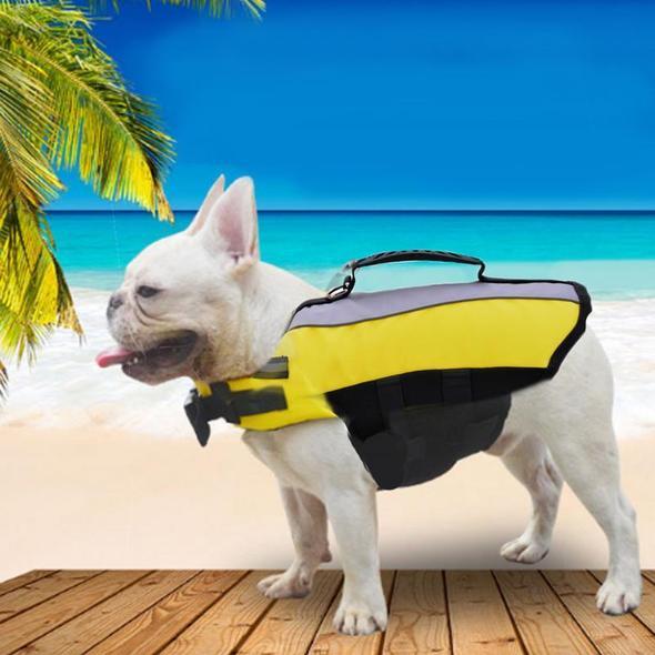 neon french bulldog life jacket frenchie world shop yellow s 15265146830893 590x