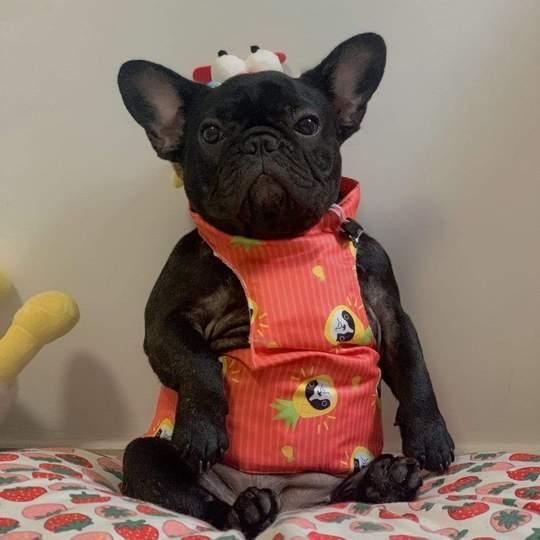 summer adventures french bulldog cooling vest 1