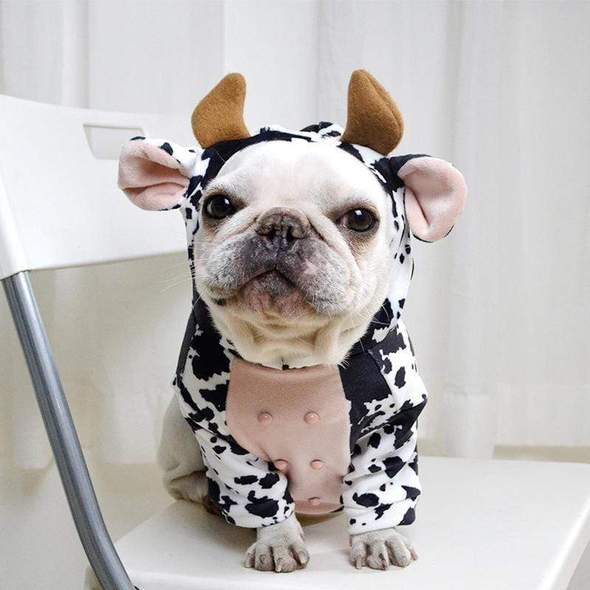 cow french bulldog hoodie frenchie world shop black s 26589791289493 590x