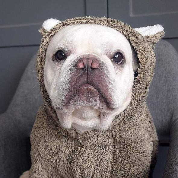 koala fleece dog hoodie frenchie world shop 4641583726637 590x