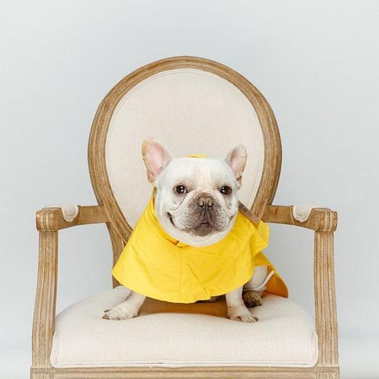 classic french bulldog raincoat frenchie world shop 3671883972709 540x