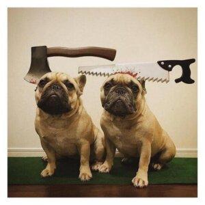 french bulldog halloween headwear frenchie world shop 12721211080749 540x