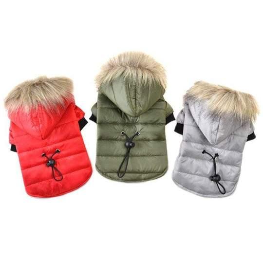 frenchie winter hooded jacket frenchie world shop 18261479719061 540x