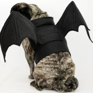 bat pig dog costume
