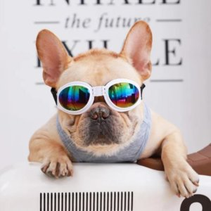 french bulldog adjustable glasses