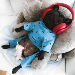 ultra soft bandito dog pajamas